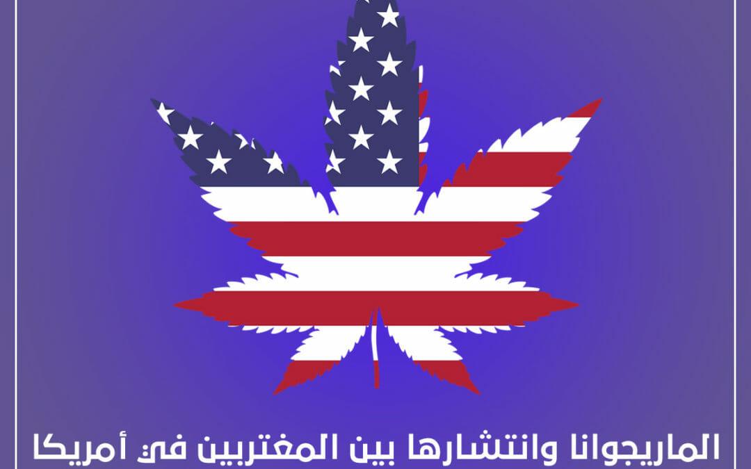الماريجوانا وانتشارها بين المغتربين في امريكا