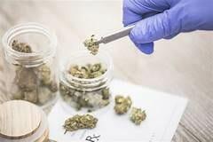 تاريخ ظهور الماريجوانا وانتشارها