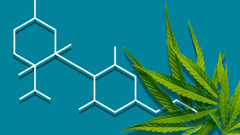 تعريف الماريجوانا وتركيبها الكميائي
