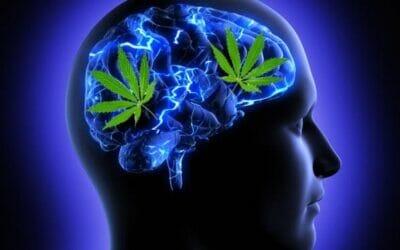 تاثير الماريجوانا على المخ والاعصاب