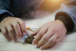السلوك الظاهري لمدمن الماريجوانا