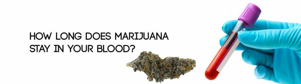 مدة بقاء الماريجوانا فى الجسم